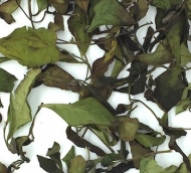 gong-mei-white-tea-dry-leaves